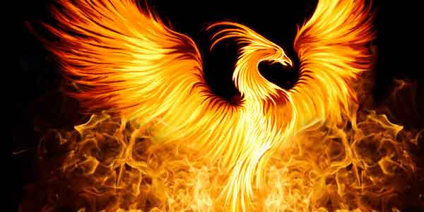 Phoenixing On The Rise2